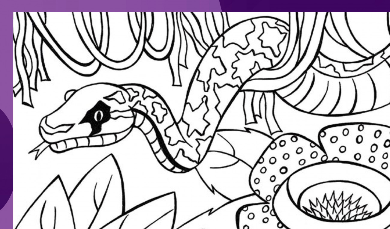 Snake Colouring In