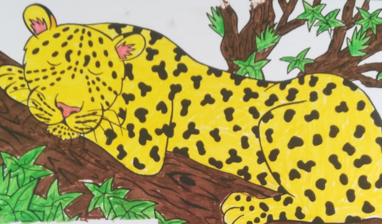 Cheetah Colouring In